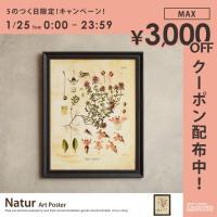 植物をモチーフにしたデザインのアートポスター。簡単にお部屋の雰囲気を変えることが出来ます。 ■サイズ...