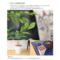 観葉植物 光触媒 造花 トネリコ グリーン 人工植物 消臭