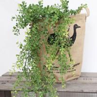 いなざうるす屋 フェイクグリーン 丸い葉っぱのモフモフ 緑 ガーランド 人工観葉植物 壁掛け