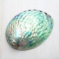 ニュージーランド近海に生息する巻貝の一種で特有の光沢のある殻は、加工され装身具などに用いられています...