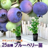 ブルーベリー苗木 サザンハイブッシュ系 選べる25品種