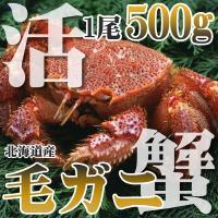 カニ かに 500g 毛ガニ 大中 極上 活 毛ガニ 北海道虎杖浜産 こじょうはま 未冷凍 北海道特産
