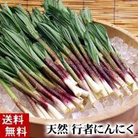 【送料無料】ニンニク臭が強烈です  北海道の春の山菜、行者ニンニク。 アイヌネギ、ヒトビロ、キトビロ...