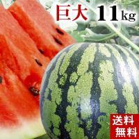 【送料無料 北海道すいか 特大 夏の旬フルーツ】 昔ながらの縞皮西瓜です。ブランド西瓜で有名な「でん...