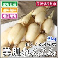 れんこん生産量日本一の茨城県で、3兄弟が力を合わせて栽培をしています。  「土壌中の微生物をうまく利...