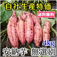 東京 国立市にある自社農場にて6月に植え付けしたさつまいもが収穫を迎えました。  育てた品種は、ねっ...