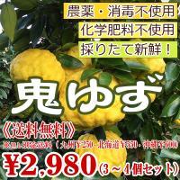 鬼柚子(おにゆず)2個〜3個セット(大きさにより変わります)  ◆注文を頂いてから収穫⇒その日のうち...