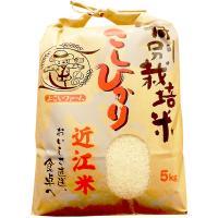 こしひかりは米のねばりと歯ごたえが特徴で、多くの人に愛されている日本を代表するお米です。近江米こしひ...