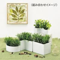 クリエイティブフラワーアート サークルベース 《2個セット》(観葉植物/フェイク/おしゃれ)