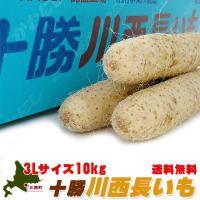 十勝川西長いも10kg(3Lサイズの長芋)真っ白できめ細かい肉質のながいも とろろ芋にすると粘りがあります(北海道特産品の長イモ)(送料無料)