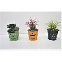 【ハロウイン】【ハロウインボタニカル3点セット】造花 人工観葉植物 【送料無料】