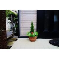 サイズ 高さ60cm 幅28cm 材質  葉はポリエステル  花器は合成樹脂 人工観葉植物 ミックス...