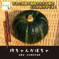 【暑い時期の常温便配送OK!】坊ちゃんかぼちゃ  減農薬・化学肥料不使用 1個