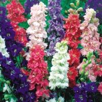 種 花たね デルフィニウム混合 1袋(150mg)