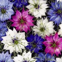 種 花たね ニゲラ混合 1袋(1000mg)