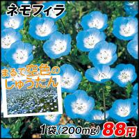 種 花たね ネモフィラ 1袋(200mg) / 花種 花の種 はなたね 鉢植え向き 鉢向き 花壇向き プランター向き 鉢・花壇向き ブルーガーデン 青い花
