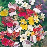 種 花たね ネメシア バイカラー 混合 1袋(50mg) / 花種 花の種 はなたね 鉢植え向き 鉢向き 花壇向き プランター向き 鉢・花壇向き
