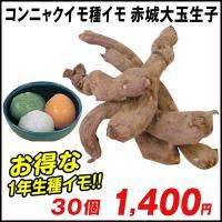 1年生種イモ! 商品情報 「生子」とは1年生種芋のこと。植え付けた年の秋には2年生の種芋が収穫できる...