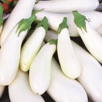 種 野菜たね ナス しろなすくん 1袋(0.5ml) / 野菜の種 なす 茄子 なすび 国華園 ytsc100