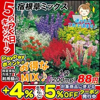種 花たね 宿根草ミックス 1袋(200mg) / 花種 花の種 はなたね ペレニアル 多年草