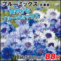 種 花たね 矢車草 ブルーミックス 1袋(500mg) / 花種 花の種 はなたね ヤグルマギク 矢車菊 セントウレア セントーレア ドライフラワー ブルーガーデン 青い花