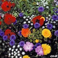 種 花たね 高性切花ミックス 1袋(400mg)