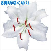 商品情報 6月に植えて8月頃に咲くゆり。お盆シーズンの切花に! 草丈 80〜130cm 栽培適地 庭...