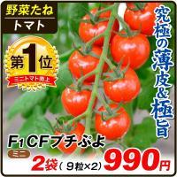 種 野菜たね トマト F1 CFプチぷよ 2袋 / 野菜の種 ミニトマト 薄皮 国華園 ytsc84