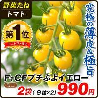 種 野菜たね トマト F1 CFプチぷよイエロー 2袋 / 野菜の種 ミニトマト 薄皮 国華園 ytsc84