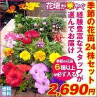 季節の花苗 24ポットセット 送料無料