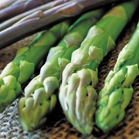 商品情報 太くよく揃う茎は鮮やかな緑色。上物率が高く、病気にも強い優秀品種。 お届け状態 素掘苗  ...