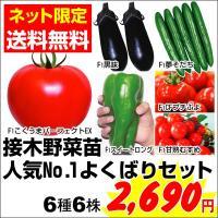 セット内容 トマト こくうまパーフェクトEX 1株 トマト 甘熟むすめ 1株 ミニトマト プチぷよ ...