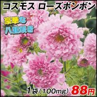 花たね 種 コスモス ダブルクリック ローズボンボン 1袋(100mg) / タネ 種 アキザクラ 秋桜 国華園