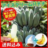 送料込 果樹苗 耐寒性バナナ アイスクリーム 1株 / 寒さに強い 果樹 フルーツ 果物 苗 苗木