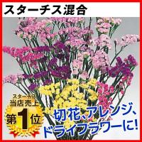 [限定販売]種 花たね スターチス混合 1袋(100mg)