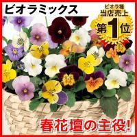 [限定販売]種 花たね ビオラ混合 1袋(60mg)
