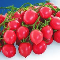 種 野菜たね トマト F1ピンキーハート 1袋(15粒) / 野菜の種 国華園 ytsc85