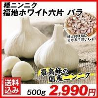 ニンニク種球 福地ホワイト六片 (バラ) 500g 送料込み / 国華園