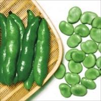 1粒6.5gの大粒ソラマメ! 商品情報 一寸系品種の中では最も大粒で味が良いと言われる愛媛県の伝統野...