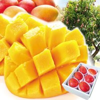 商品情報 濃厚な甘みの中に芳醇な香りがギュッと詰まった、熱帯果実の王様・アップルマンゴーを台湾から直...