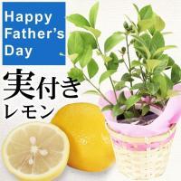 父の日 2019 送料無料 実付き果樹苗 レモン 1株