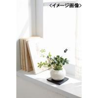 花 観葉植物シュガーバイン(造花)インテリア 置物 贈り物に最適