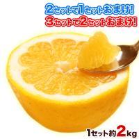 ■内容 熊本県産和製グレープフルーツ(ジューシーみかん/河内晩柑)2kg ※訳あり品 ※サイズ不選別...