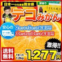 デコポンと同品種 本場熊本県産 訳ありデコみかん1.2kg(サイズ無選別)2セット購入で1セット分おまけ※複数購入でおまとめ 3月中旬-4月上旬頃より順次出荷