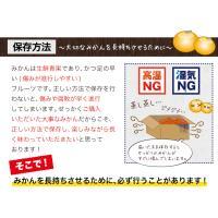 クーポン利用で100円OFF 送料無料 熊本みかん 1.5kg 規格外訳あり 3セットで3セット分おまけ 複数購入は1箱おまとめ 12月中旬-12月末頃より順次出荷 kumamotofood 09