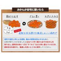 クーポン利用で100円OFF 送料無料 熊本みかん 1.5kg 規格外訳あり 3セットで3セット分おまけ 複数購入は1箱おまとめ 12月中旬-12月末頃より順次出荷 kumamotofood 10