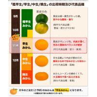 熊本 みかん 訳あり 1.5kg 送料無料 2セットで1セット分、3セットなら3セット分おまけ増量 グルメ ポイント消化 12月中旬-12月末頃より順次出荷|kumamotofood|12