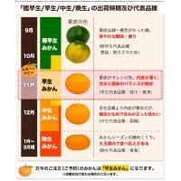 熊本 みかん 訳あり 1.5kg 送料無料 2セットで1セット分、3セットなら3セット分おまけ増量 グルメ ポイント消化 10月中旬-11月上頃より順次出荷 kumamotofood 12