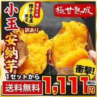 長期熟成 小玉限定 本場種子島産 訳あり 安納芋 1.2kg 小玉 2S〜3Sサイズ限定 送料無料 さつまいも  3-7営業日以内に出荷予定(土日祝日除く)|kumamotofood