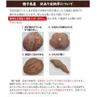 長期熟成 小玉限定 本場種子島産 訳あり 安納芋 1.2kg 小玉 2S〜3Sサイズ限定 送料無料 さつまいも  3-7営業日以内に出荷予定(土日祝日除く)|kumamotofood|12